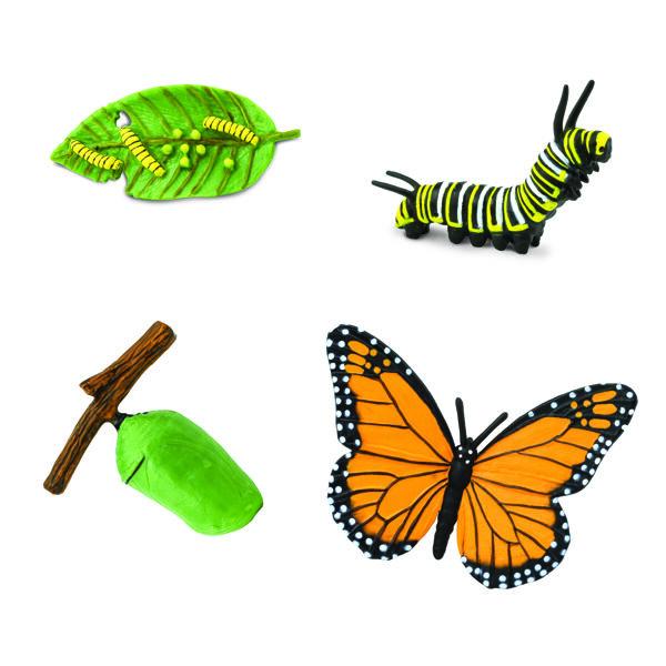 Monarha tauriņa dzīves cikls