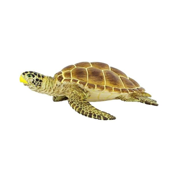 Jūras Bruņurupucis Loggerhead